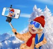 Chat avec des skis prenant un selfie ainsi qu'un smartphone Photo libre de droits