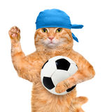 Chat avec du ballon de football blanc Photographie stock