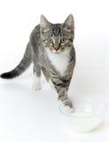 Chat avec du lait Images libres de droits