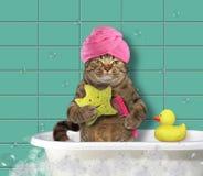 Chat avec l'éponge de peigne et de bain photographie stock