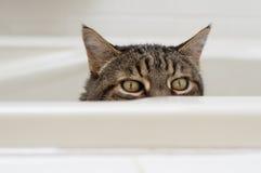 Chat avec l'expression drôle jetant un coup d'oeil au-dessus du côté d'une baignoire Images stock