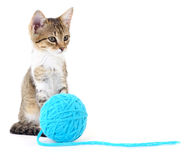 Chat avec la boule du fil Photo stock