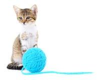 Chat avec la boule du fil Photographie stock