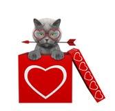 Chat avec la flèche se reposant dans la boîte de valentines D'isolement sur le blanc Photos stock