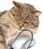 Chat avec la souris d'ordinateur Image stock
