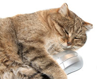 Chat avec la souris d'ordinateur Photographie stock