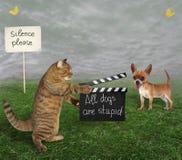 Chat avec le bardeau et chien photo stock