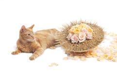 Chat avec le bouquet de fleur Photographie stock