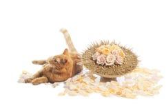 Chat avec le bouquet de fleur Photos stock