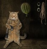 Chat avec le cactuse 1 image stock