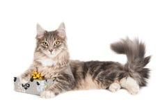Chat avec le cadeau enveloppé Image libre de droits