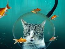 Chat avec le casque de plongée dans l'étang de poisson rouge Photo stock