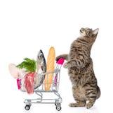 Chat avec le chariot à achats complètement de la nourriture sur le backgr blanc Photographie stock libre de droits