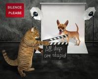 Chat avec le chien dans le studio photos stock
