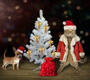Chat avec le chien près de l'arbre de Noël blanc image stock
