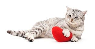 Chat avec le coeur de jouet Image stock