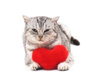 Chat avec le coeur de jouet Photographie stock