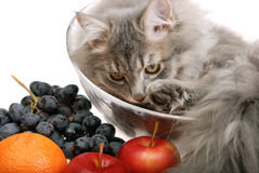 Chat avec le fruit Photos stock