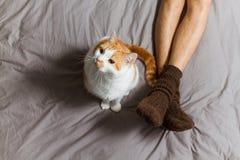 Chat avec le propriétaire sur le lit image stock