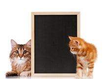 Chat avec le tableau noir photographie stock