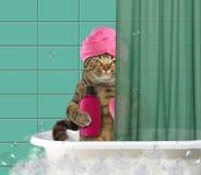 Chat avec le turban dans la salle de bains photos libres de droits