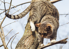 Chat avec les rayures noires se reposant sur une branche d'un arbre qui n'a eu aucune feuille Image stock