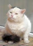 Chat avec les yeux expressifs Photos stock