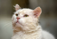 Chat avec les yeux expressifs Photo stock