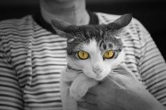 chat blanc noir avec les yeux jaunes photo stock image 42235666. Black Bedroom Furniture Sets. Home Design Ideas
