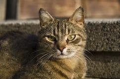 Chat avec les yeux verts Image libre de droits