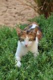 Chat avec les yeux verts Photographie stock
