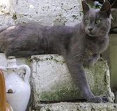 Chat avec les yeux verts sur le mur Photo libre de droits