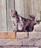 Chat avec un chaton Photos libres de droits
