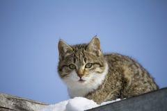 chat avec un regard réfléchi contre le ciel rêves sans abri de chaton du concept à la maison photographie stock libre de droits