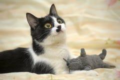 Chat avec une coloration d'amusement avec une souris de jouet Photos libres de droits