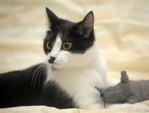 Chat avec une coloration d'amusement avec une souris de jouet Photo stock