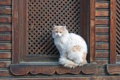 Chat blanc à l'hublot Photographie stock libre de droits