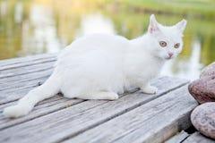 Chat blanc Photographie stock libre de droits