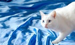 Chat blanc avec des yeux bleus Photographie stock libre de droits