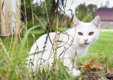 Chat blanc dans l'herbe Photographie stock libre de droits