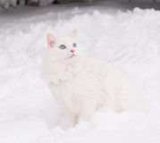 Chat blanc dans la neige Image libre de droits