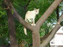 Chat blanc dans un arbre Photos stock