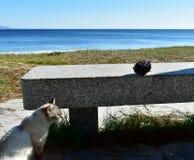 Chat blanc dans une promenade de plage avec un banc en pierre et un pinecone Aiguilles d'herbe et de pin, l'eau bleue L'Espagne,  photos stock