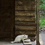 Chat blanc devant un plat avec la nourriture sur le porche d'une vieille cabane en rondins photo stock