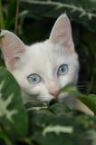 Chat blanc domestique dans le jardin Photographie stock libre de droits