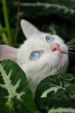 Chat blanc domestique dans le jardin Images libres de droits