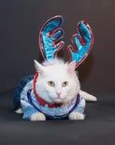 Chat blanc effrayé avec les yeux jaunes dans un Sui tricoté Images libres de droits