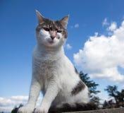 Chat blanc et gris sur un toit Images libres de droits