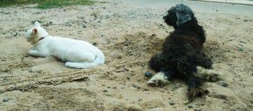 chat blanc et un chien Photographie stock libre de droits