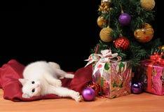 Chat blanc jouant à côté de l'arbre de Noël photographie stock